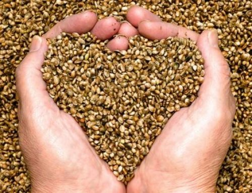 What Are Hemp Seeds? Hemp Seeds Health Benefits And Side Effects!